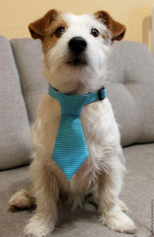Аксессуары для собак, ручной работы. Ярмарка Мастеров - ручная работа. Купить Галстук для собаки. Handmade. Синий, для собаки, ошейник для собак
