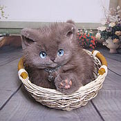 Котенок Филя