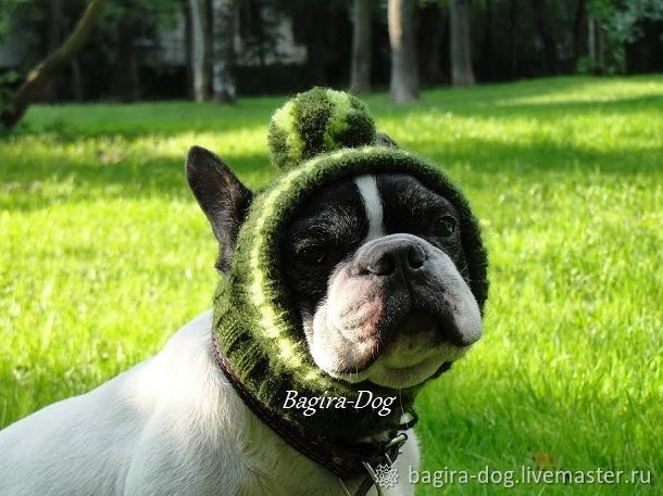 Hats for bulldogs, pugs, Pet clothes, Moscow,  Фото №1