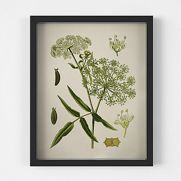 Картины и панно ручной работы. Ярмарка Мастеров - ручная работа Красивый ботанический винтажный плакат для украшения интерьера. Handmade.