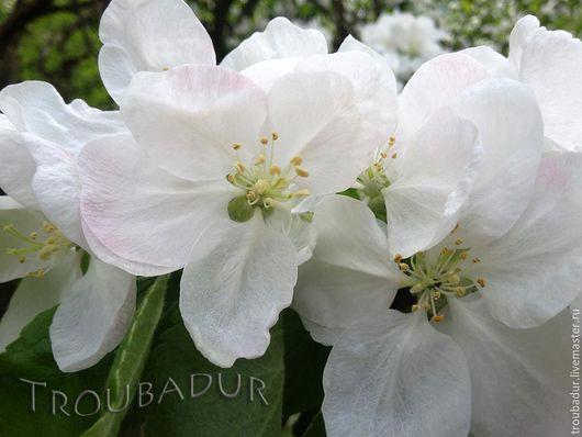 """Фотокартины ручной работы. Ярмарка Мастеров - ручная работа. Купить """"Яблоня в цвету"""" - серия авторских фотокартин. Handmade. Белый, что подарить"""