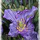 Order Poppies lilac dew. Skaskilesa. Livemaster. . Composition Фото №3