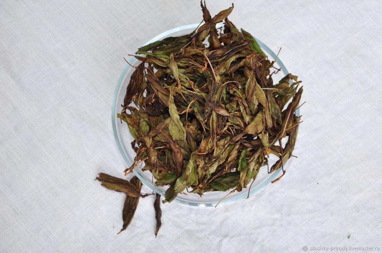 Чай из ферментированных листьев вишни. Сбор - май 2020г, Травы, Апшеронск,  Фото №1