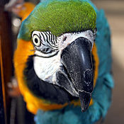 """Картины и панно ручной работы. Ярмарка Мастеров - ручная работа Фотокартина """"Любопытный попугай"""". Handmade."""