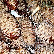 Шишки ливанского кедра и всякие другие шишки