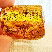 Украшения handmade. Livemaster - original item Grasshopper in amber. Handmade.