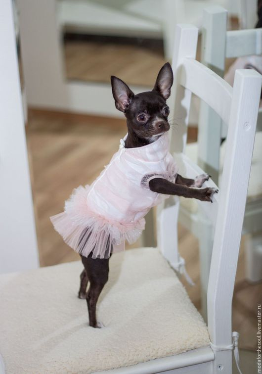 Одежда для собак, ручной работы. Ярмарка Мастеров - ручная работа. Купить Платье. Handmade. Бледно-розовый, бархатная тесьма