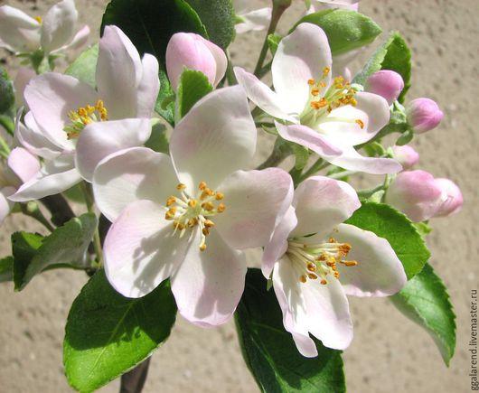 """Цветы ручной работы. Ярмарка Мастеров - ручная работа. Купить """"Один раз в год..."""" Ветка яблони из полимерной глины. Handmade."""