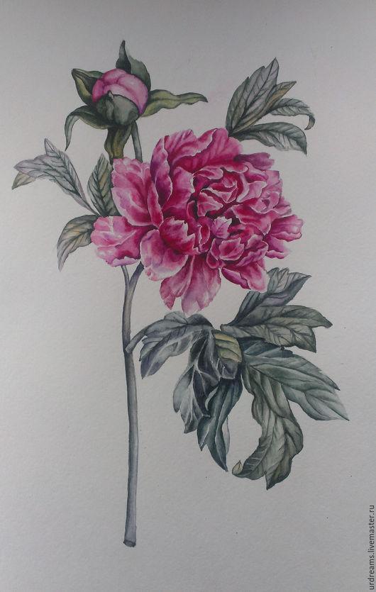 Картины цветов ручной работы. Ярмарка Мастеров - ручная работа. Купить Пион. Handmade. Розовый, акварельная живопись