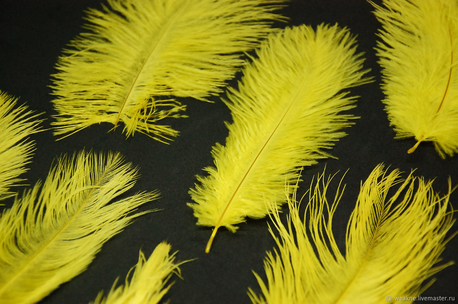 Ostrich feathers yellow 15-17 cm, Feathers, Moscow,  Фото №1