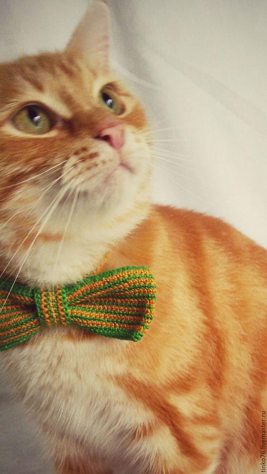 Одежда для кошек, ручной работы. Ярмарка Мастеров - ручная работа. Купить Галстук-бабочка для кота. Handmade. Комбинированный, рыжий кот