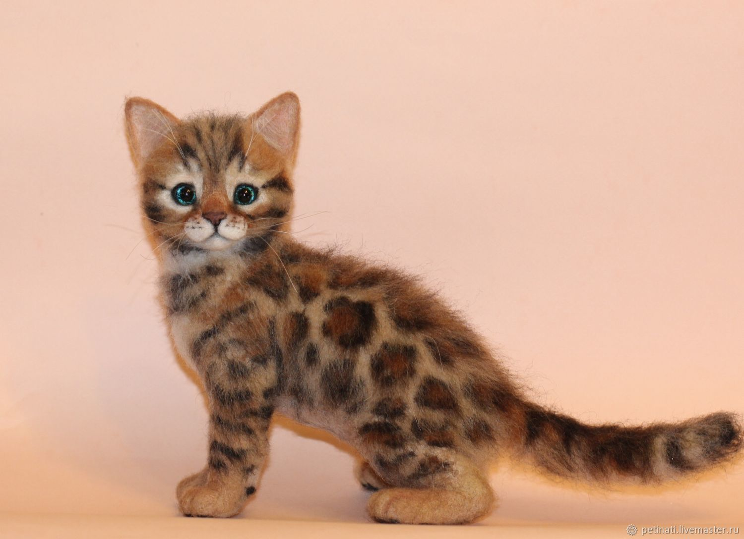 Buy Bengal kitten Reserve participant of the exhibition purchase