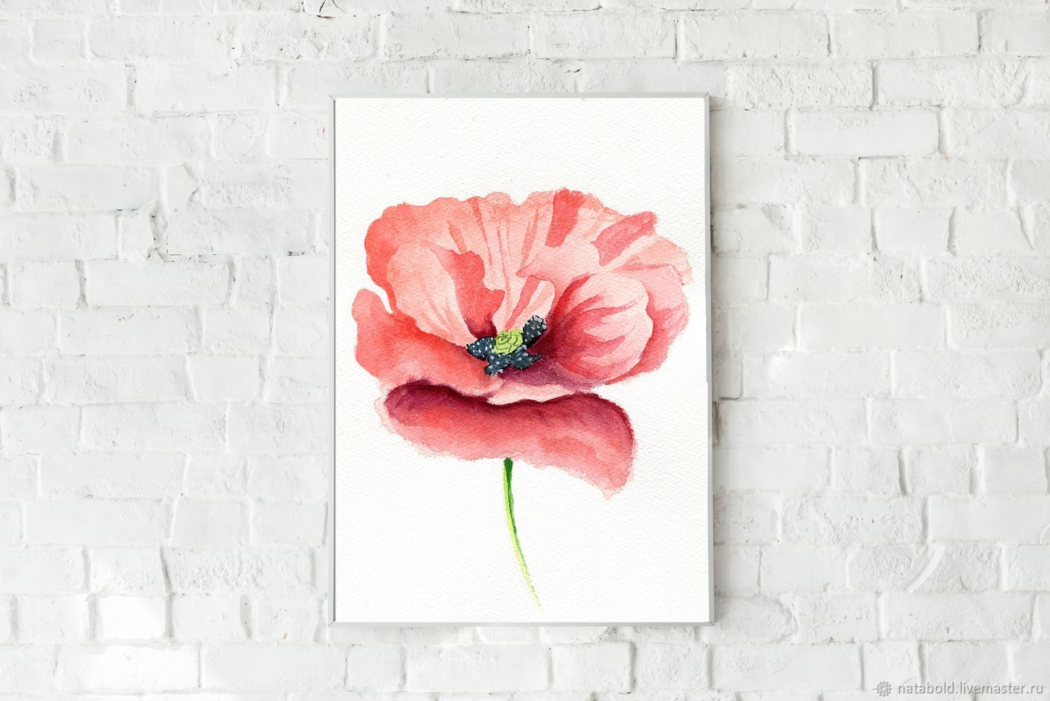 Watercolor Scarlet poppy, Pictures, Rostov-on-Don,  Фото №1