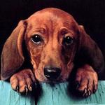 Lucky_Dog - Ярмарка Мастеров - ручная работа, handmade