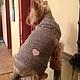 Одежда для собак, ручной работы. Заказать Жилет для маленькой собачки Сердце. Татьяна (tanasov). Ярмарка Мастеров. Жилет вязаный
