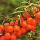 Сочная красная ягода -70 Декупажная радость