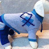 """Для домашних животных, ручной работы. Ярмарка Мастеров - ручная работа костюм для собак """"Стиляга"""". Handmade."""