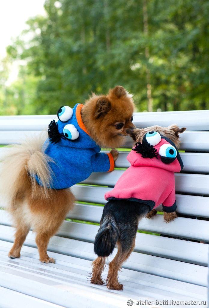 Одежда для питомцев: Худи с глазами, Одежда для собак, Санкт-Петербург, Фото №1