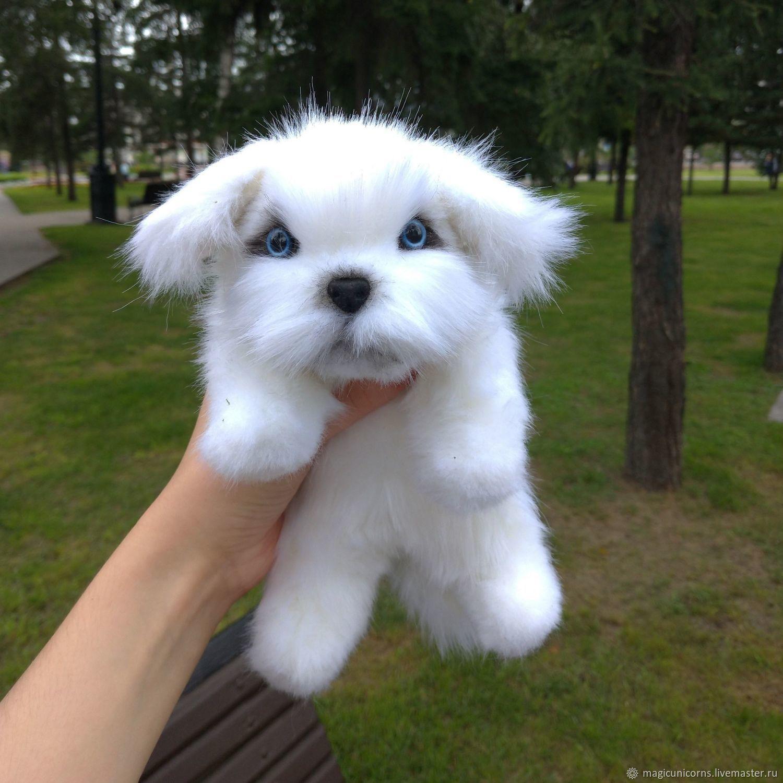 Мягкая игрушка болонка мальтезе Боб из искусственного меха, Игрушки, Иркутск, Фото №1