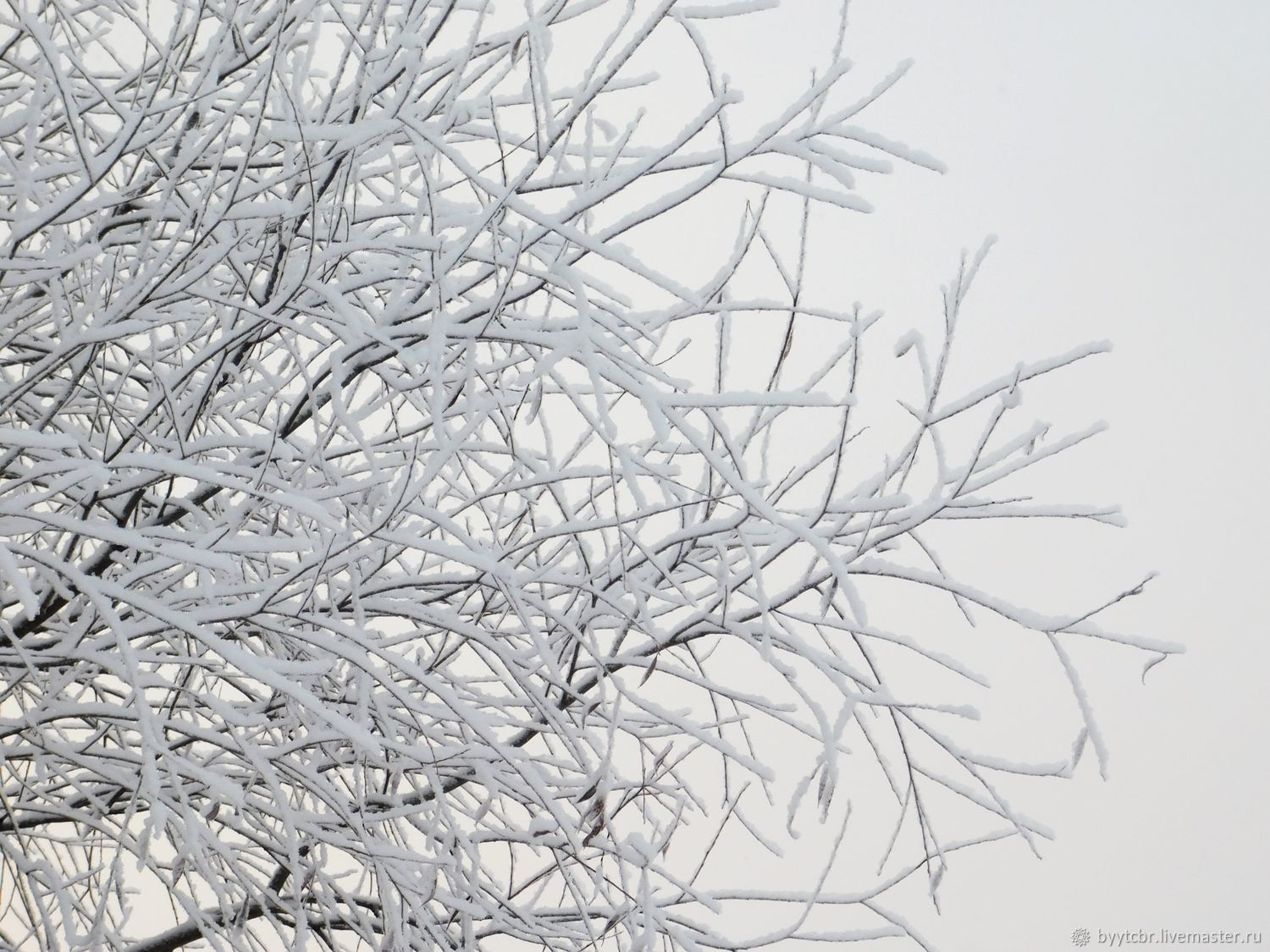 SNOWY ARMS photo pictures, Fine art photographs, Moscow,  Фото №1
