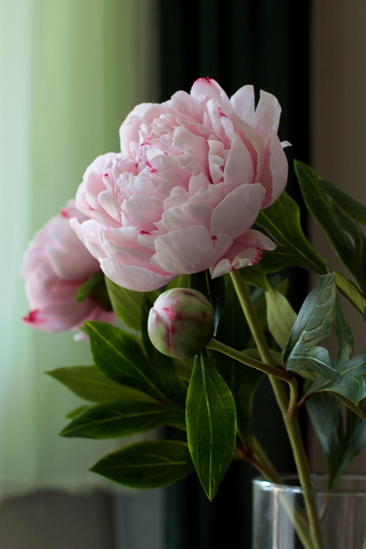 Розовые пионы из полимерной глины, Букеты, Москва,  Фото №1