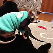 Для домашних животных, handmade. Livemaster - original item Clothing for cats