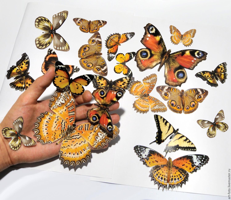 Vinyl sticker - Colorful butterflies. Glow in the dark, Interior elements, Sterlitamak,  Фото №1