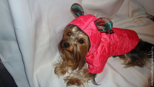 Одежда для собак, ручной работы. Ярмарка Мастеров - ручная работа. Купить Жилетка для собаки - Дуэт. Handmade. Коралловый, ушки, Плащёвка