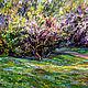Майский сад, Картины, Москва,  Фото №1