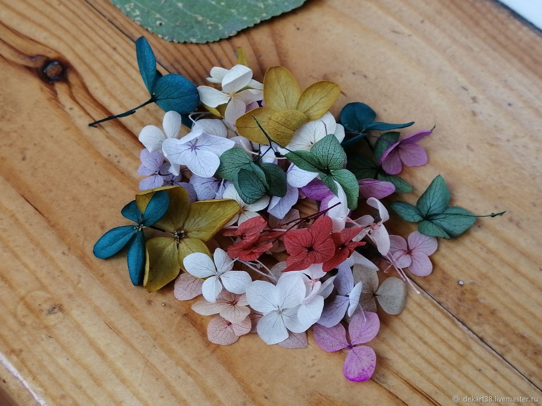 Цветы стабилизированные. Гортензия МИКС 50 шт – купить на Ярмарке Мастеров – LN5GIRU | Сухоцветы, Иркутск