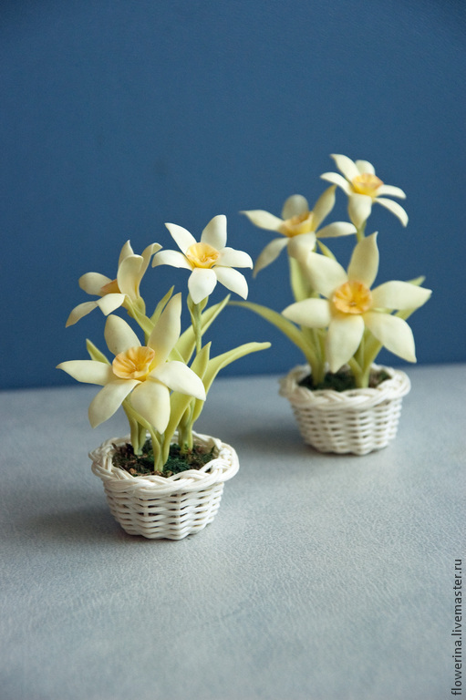 Miniature Daffodils - spring flowers, Model, Moscow,  Фото №1