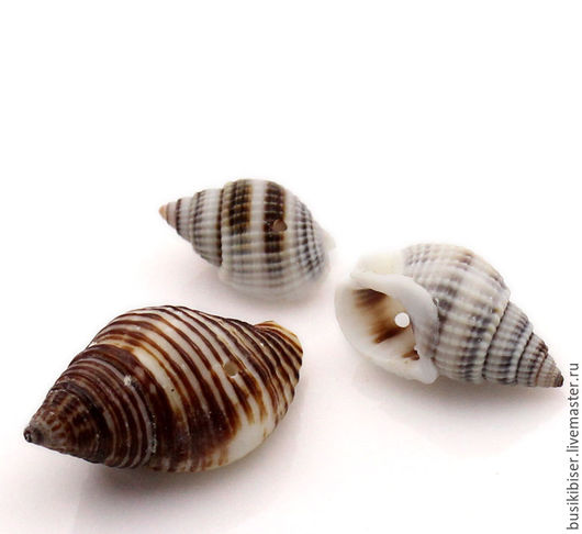 Бусины из раковины естественные бело-кофейного цвета