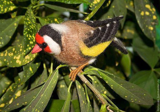 Щегол - птица с очень красивым оперением. Обладает приятным голосом. Подвижная и любознательная птичка.