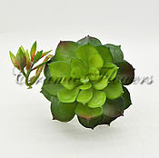 Материалы для творчества handmade. Livemaster - original item Artificial greens, succulent