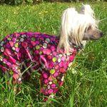 """"""" Пёс и Ко """" одежда для собак. - Ярмарка Мастеров - ручная работа, handmade"""