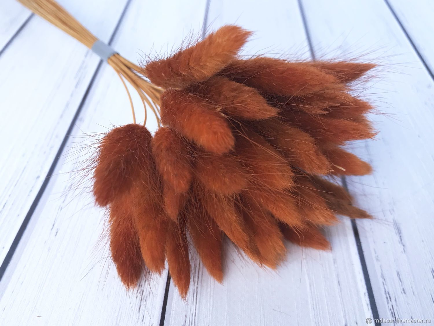Lagurus brown 50 cm 30 spikelets, The dried flowers, Moscow,  Фото №1