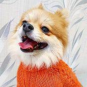"""Одежда для питомцев ручной работы. Ярмарка Мастеров - ручная работа Свитер """"Рыжик"""" для комнатной собачки. Handmade."""