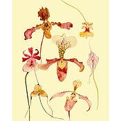 Иллюстрации ручной работы. Ярмарка Мастеров - ручная работа Ботаническая иллюстрация-плакат ОРХИДЕИ (2), А3. Handmade.