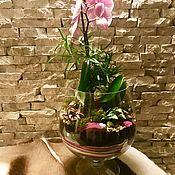 Цветы и флористика ручной работы. Ярмарка Мастеров - ручная работа Флорариум «Орхидея в бокале». Handmade.