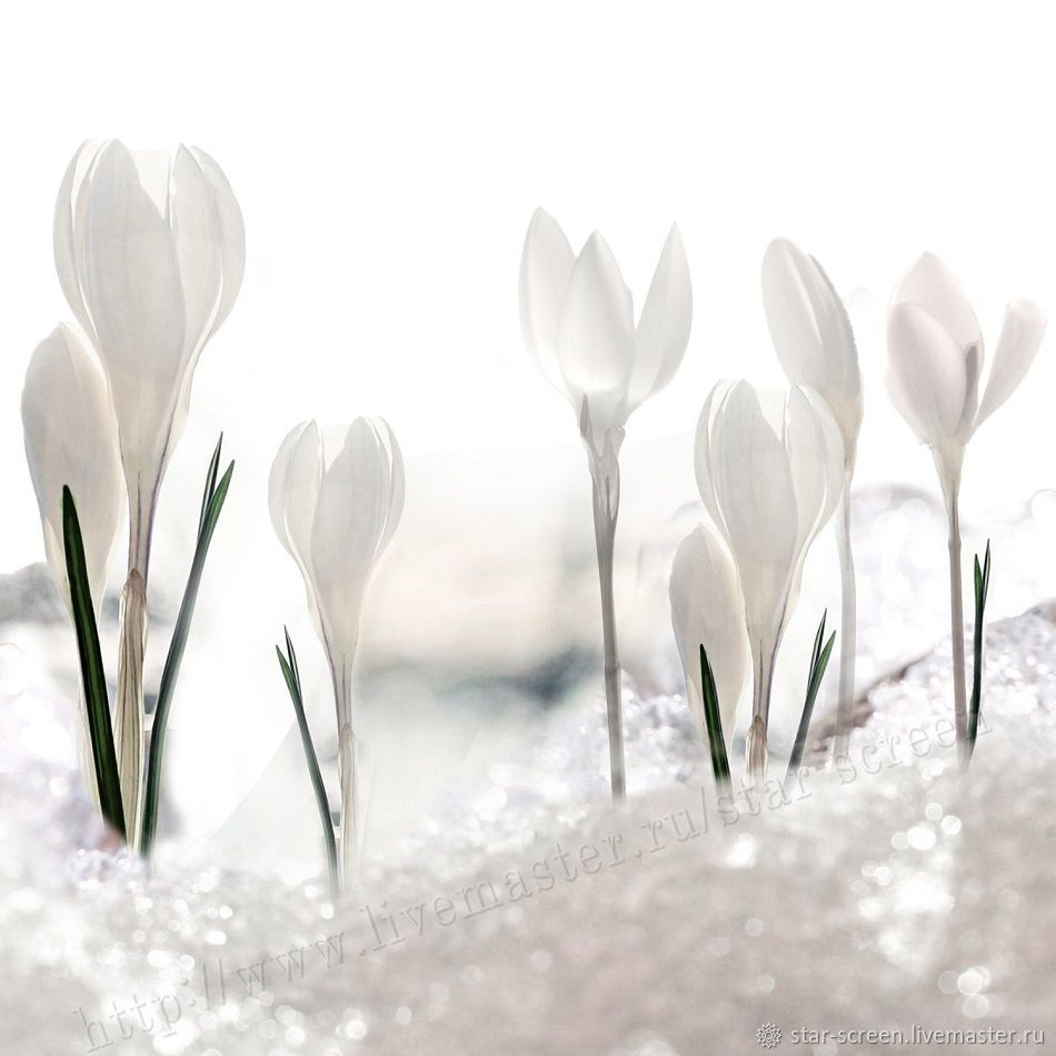 Подснежники. Прозрачная весна, Фотокартины, Санкт-Петербург,  Фото №1