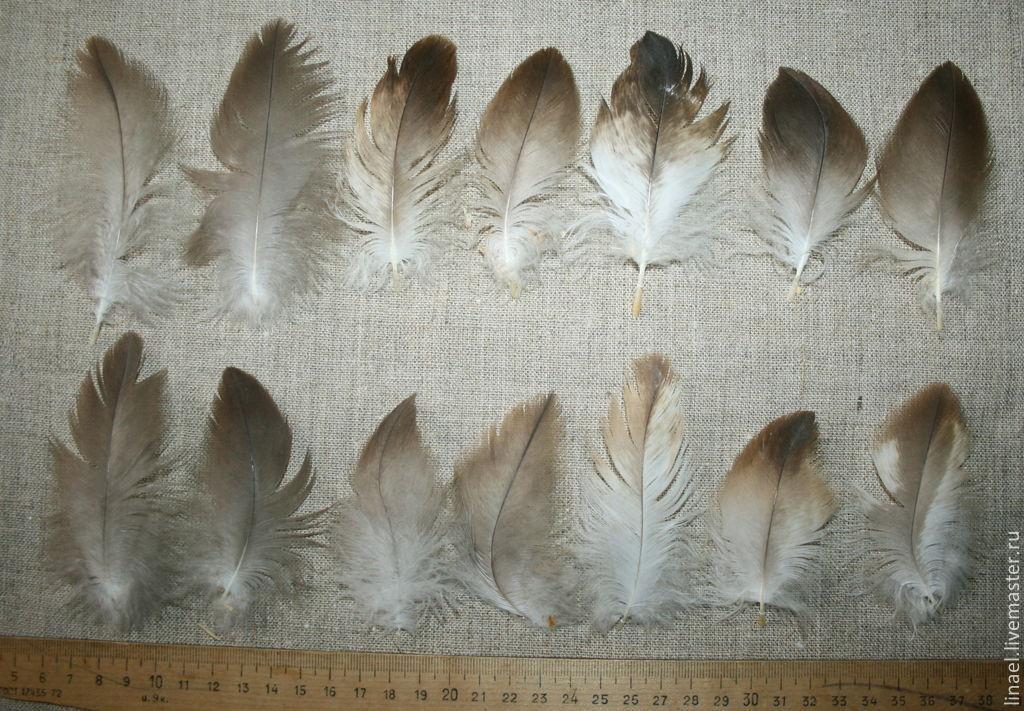 Любителям Перьев | ••• Хищные птицы и Соколиная охота