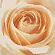 Примерный вид вышивки по схеме `Нежная роза`