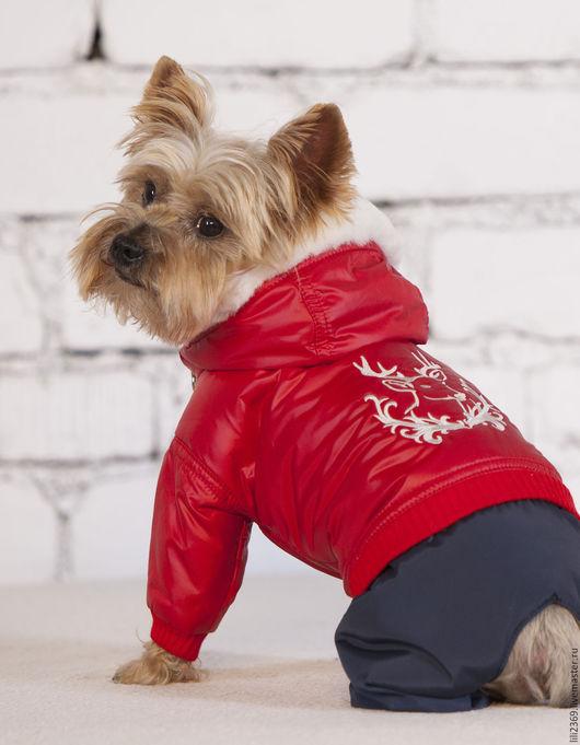 Одежда для собак, ручной работы. Ярмарка Мастеров - ручная работа. Купить Комбинезон для собаки  Рождество. Handmade. Комбинированный, одежда для собак