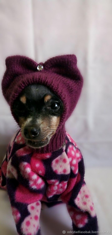 Шапка для собаки, Одежда для питомцев, Норильск,  Фото №1