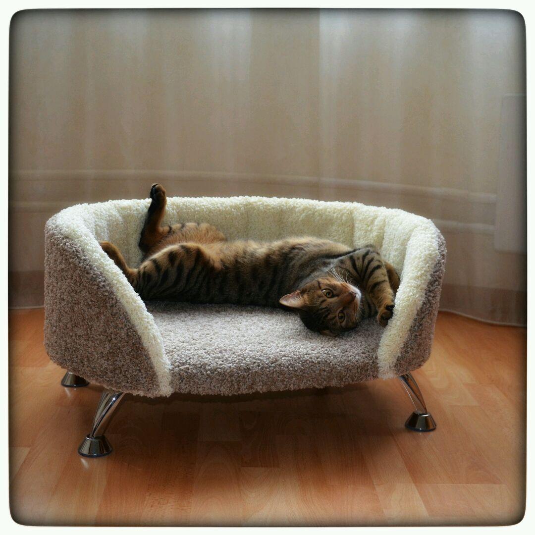 Диван-лежанка для кота своими руками