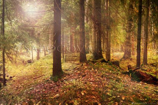 Алина Сапогова. Авторская фотокартина ` Deep forest`.  Фотокартина волшебного леса. Фотокартина для интерьера. Лесной пейзаж. Авторская фотография. Эксклюзивная художественная фотография.