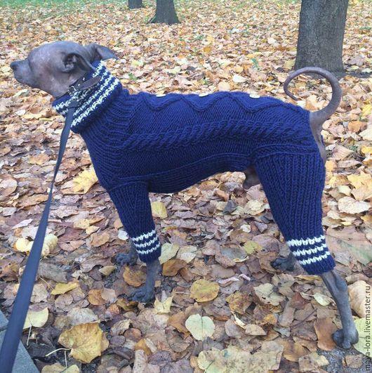 """Одежда для собак, ручной работы. Ярмарка Мастеров - ручная работа. Купить Одежда для собак. Комбинезон """"Ксоло"""". Handmade. Тёмно-фиолетовый"""