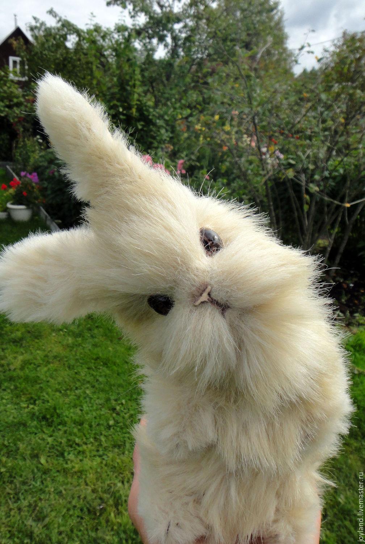 Картинка лохматый заяц