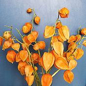 Цветы и флористика ручной работы. Ярмарка Мастеров - ручная работа Ветки физалиса из холодного фарфора. Handmade.