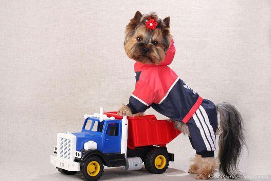 """Одежда для собак, ручной работы. Ярмарка Мастеров - ручная работа. Купить Одежда для собак """"Физкульт Привет"""". Handmade. Одежда для собак"""
